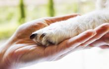 Amor y disciplina, dos factores claves en el adiestramiento canino