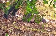 A bala y golpes asesinan a mujer en la Urbanización La Playa