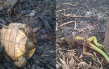 Incendio arrasó con 20 hectáreas de bosque protegido en Chimichagua, Cesar