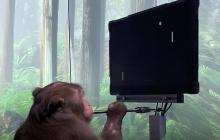 En video | Mono usa videojuego con ayuda de un chip