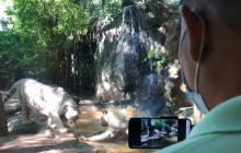 Zoológico de Barranquilla presenta programación virtual para el Día del Niño