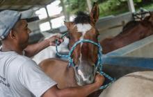 Investigadores desarrollan suero contra covid a través del plasma de caballos