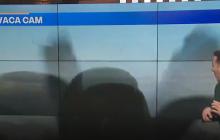 Reportero fue sorprendido por un pájaro en una transmisión