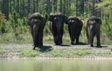 """Elefantes son llevados a reserva natural tras """"trabajar"""" en circos"""