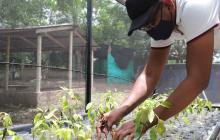 Nueva unidad acuícola y agrícola del Sena en Conejo, La Guajira