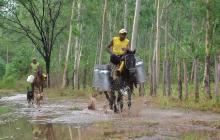 En marcha proyecto de irrigación a 400 hectáreas de cultivos en El Toco, Cesar