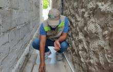 Hormigas voladoras que aparecieron en Cartagena son inofensivas: EPA