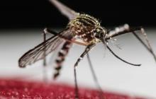 Una bacteria se suma a la lucha contra el dengue en Latinoamérica