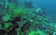 Presidente Duque destaca meta de sembrar un millón de corales en Colombia