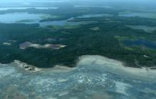 Congreso aprueba proyecto de ley que penaliza la deforestación