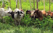 ¿Puede Colombia aprovechar el vacío en exportaciones de carne de Argentina?