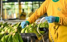 Unibán consolida las exportaciones de snacks colombianos de plátano, yuca y banano
