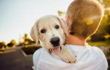 Día Mundial del Perro: conoce cómo nació esta celebración