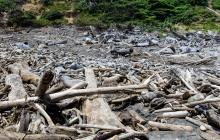 Triple A recogerá  palizada quemada en Puerto Colombia