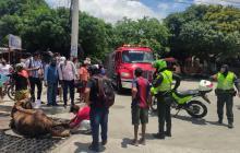 Caballo quedó atrapado en rejilla de canalización en el barrio Las Palmas en Barranquilla