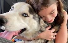 Este es el final feliz del perro que había sido abandonado en una carretera