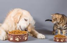 Recomendaciones para elegir el suplemento de su mascota