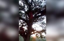 Estudiantes buscan conexión a internet desde un árbol en San Pelayo, Córdoba