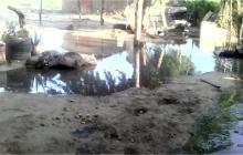 Reportan afectaciones en Maicao por fuertes lluvias