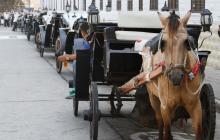 Procuraduría ordenó intervención de pesebreras de caballos cocheros en Cartagena