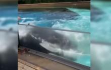 ¿Llamado de auxilio? Orca golpea vidrio de acuario donde lleva más de 10 años