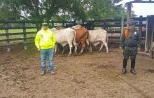 Fedegan anuncia medida para frenar el robo de ganado en Córdoba