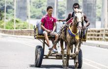 El nuevo plan para erradicar vehículos de tracción animal