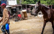 Chambacú: entre la pobreza extrema y los caballos cocheros