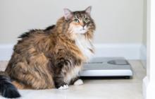 Claves para detectar si su mascota sufre de obesidad