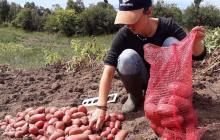La demanda de agricultura
