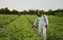 El boom del agro
