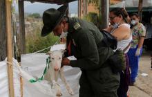 En imágenes   Así cuidan a los animales en el albergue tras avalancha de Mocoa
