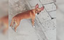 Mascotas Wasapea | Ayúdanos a regresar a casa Cloe y otra mascota