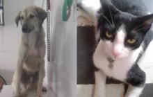 Mascotas Wasapea | Ayuda a los dueños de Sherman y de Valeria a encontrarlos