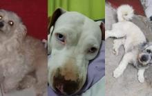 Mascotas Wasapea | Ayuda a encontrar a Saory, Bruno y a Lua