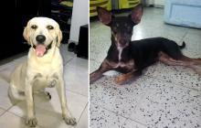 Ayudemos a estas mascotas a regresar a casa