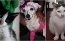 Mascotas Wasapea | Ayúdalos a regresar a casa