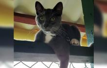 Mascotas Wasapea | Se extravió 'Django' en Villa Santos
