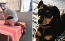 Mascotas Wasapea | 'Luna' y 'Orión' se extraviaron en Barranquilla