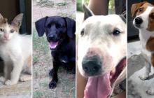 Ayudemos a estas mascotas a encontrar sus hogares