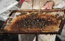 En Uruguay cultivan miel en las azoteas