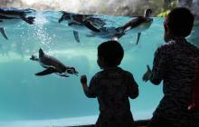 El turismo vuelve al Safari Park, en medio de la pandemia de coronavirus