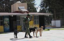 Soldados al rescate de perros callejeros en México