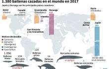1.380 ballenas fueron cazadas en 2017