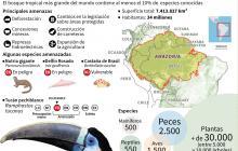 Estas son las especies amenazadas por los incendios en la Amazonía