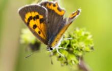 Colombia marca la ruta hacia la COP de biodiversidad| Columna de Carlos E. Correa