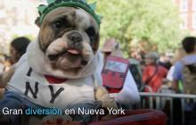 Así celebran los perros el Halloween en Nueva York