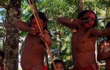 Así afilan sus flechas los indígenas de la Amazonia contra invasores