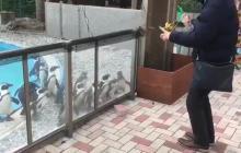 El hombre que hipnotiza pingüinos con un yoyo