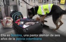 Conozca a Sombra, la perra amenazada por los narcotraficantes